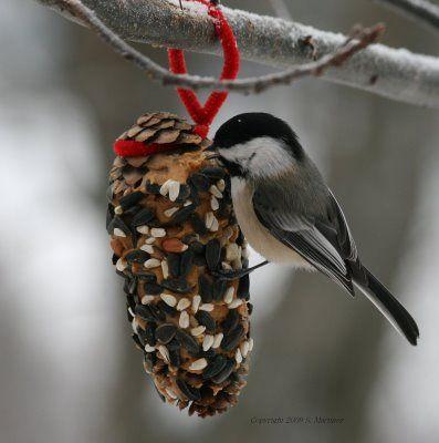make pinecone birdfeeders