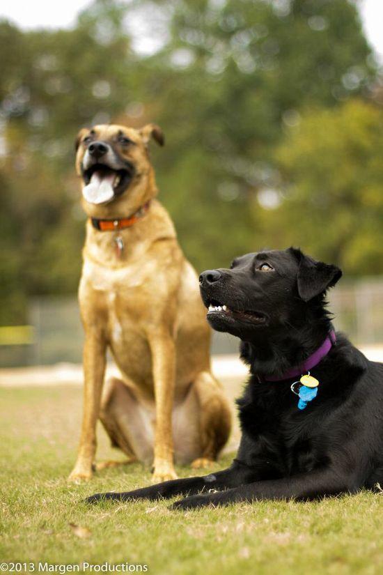 dog photography best friends