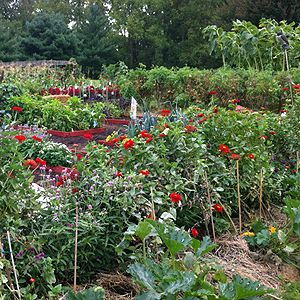 7 Secrets for a High-Yield Vegetable Garden.  Great ideas.  Had no clue that hav