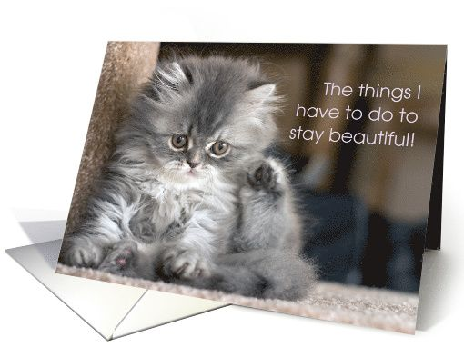 Thank You Beautician, Fluffy Gray Kitten, Cute Pets card (1192232)