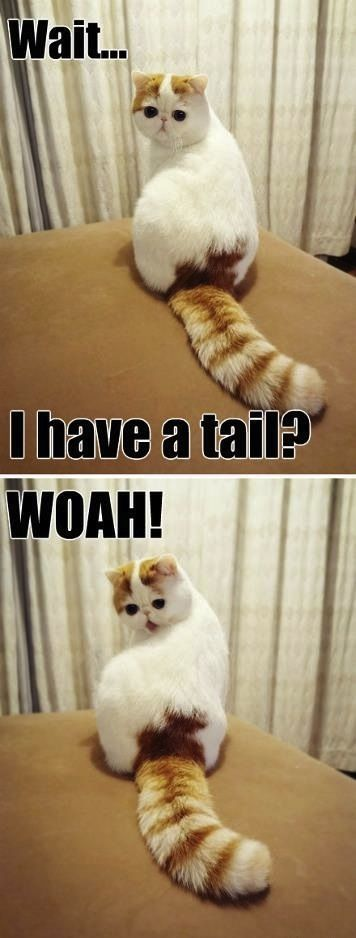 Cat discovers tail.