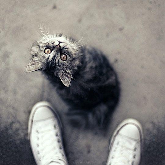 Cute baby cat photo