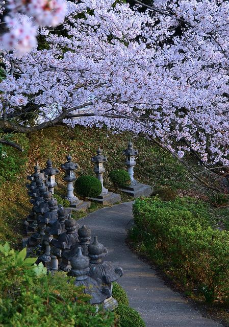 Cherry Blossoms cover a path up to a local shrine in Kojima, Japan