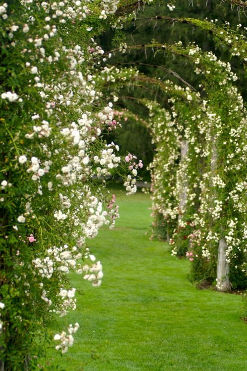 Roses and trellis