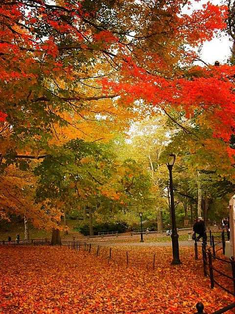Fall Central Park, NYC