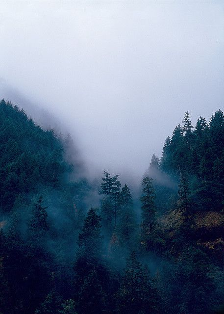 forest / mist