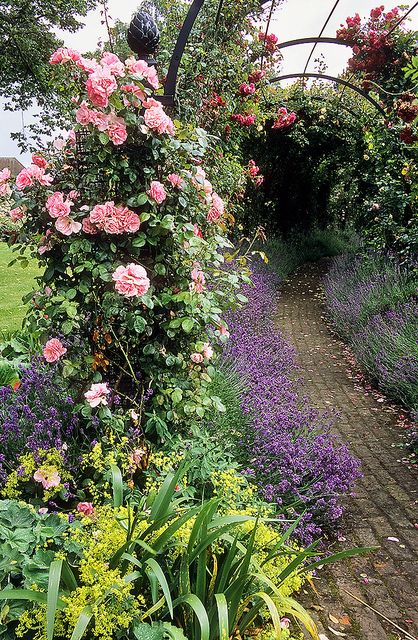 Royal National Rose Society Gardens - formerly 'The Gardens of the Rose', Hertfordshire