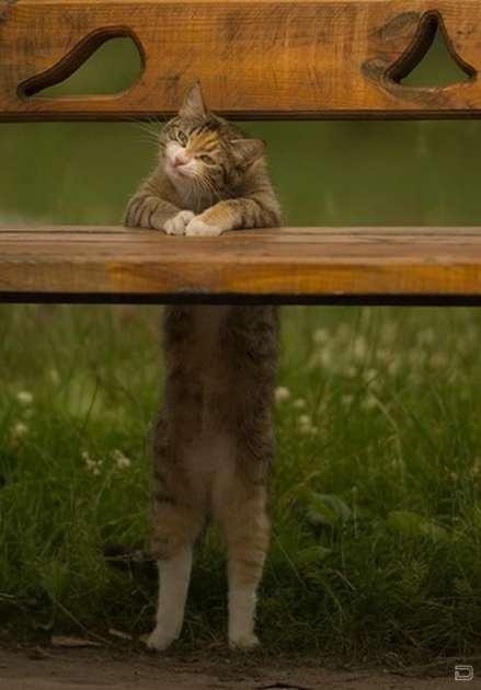 nice cat...hehehemwahaha
