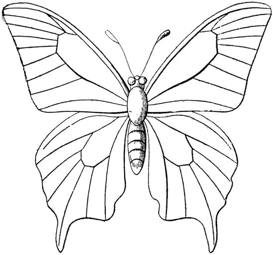 Free Butterfly Quill