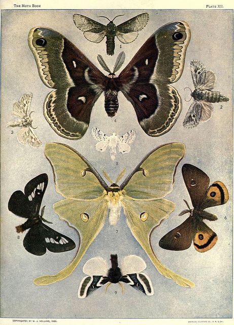 Nice arrangement of moths.