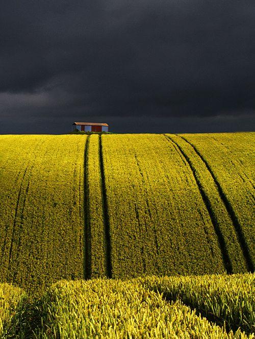 golden field, stormy sky