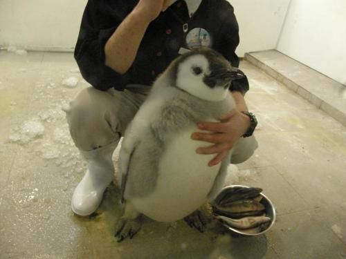 I wish this was me with that penguin!