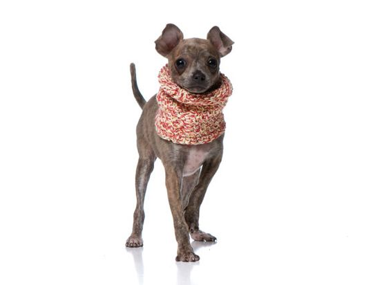 XS Peppermint Dog Cowl / Neck Warmer / by CharlieHeartsDiesel, $20.00
