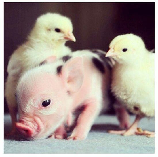 Baby Animals :))