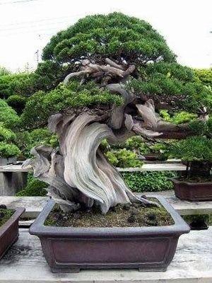 wonderful Bonsai