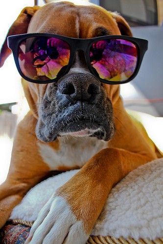 8.  Something from my bucket list:  Adopt a rescue boxer and name him Laser.  And a damatian named Lucky :)  #bareMinerals #READYtowin