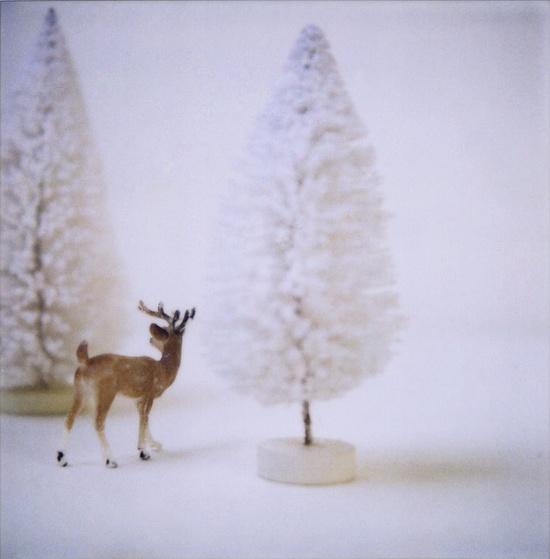 Christmas trees, Christmas trees!