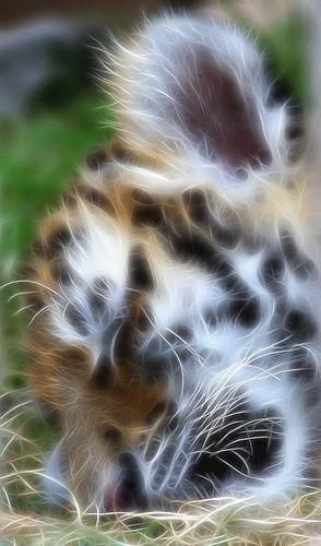 beautiful baby animal