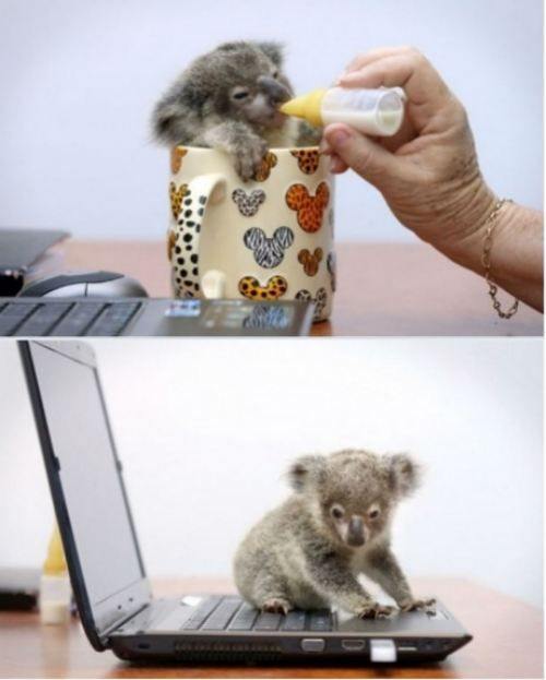 I need a baby koala bear! Sooo cute!!