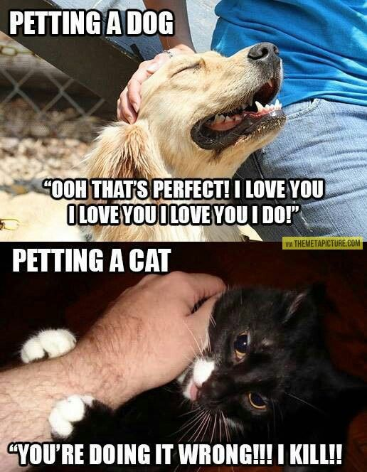 Petting a dog vs. petting a cat…