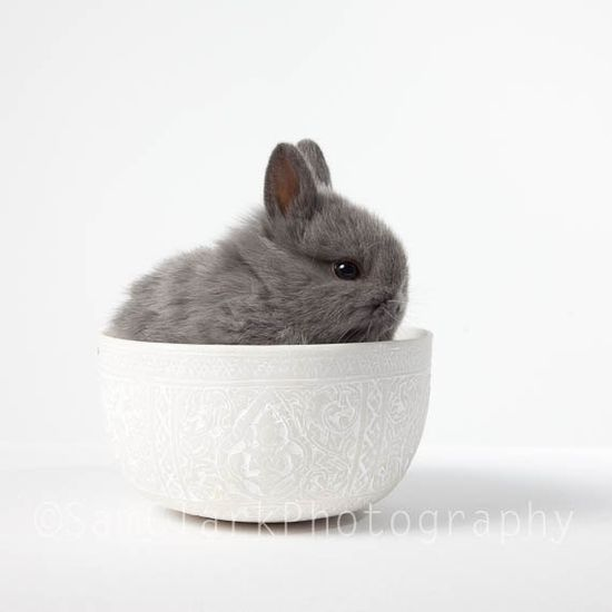 Bunny in a cup!!   ...........click here to find out more     guy.googydog.com