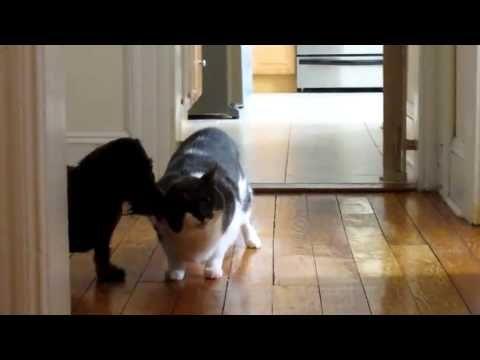 CAT!! Tucker and Zoe Play    FUNNY ! Video Part1 - videos.artpimp.bi...