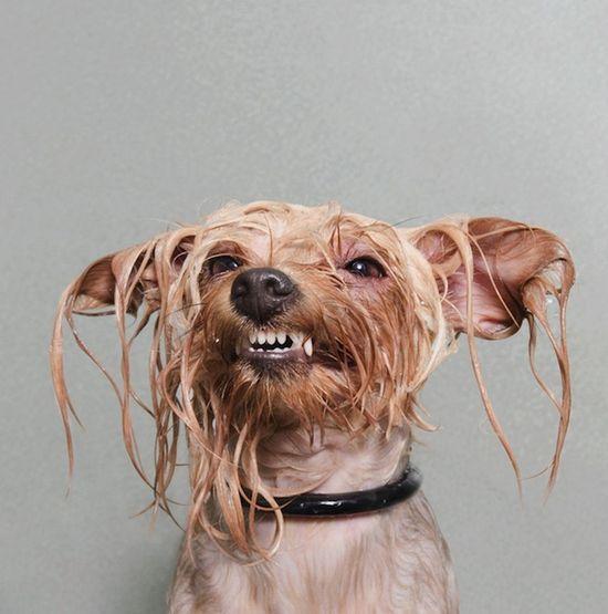 Humor: Portraits of Wet Dogs Taken Mid-Bath