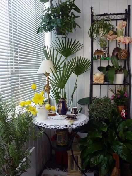 Small Garden Interior Plant Design: Small Garden Interior Plant Design