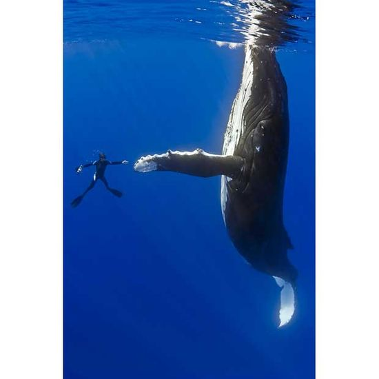 Marco Queral most famous moment. Talented diver true encounter with a colossal humpback whale.