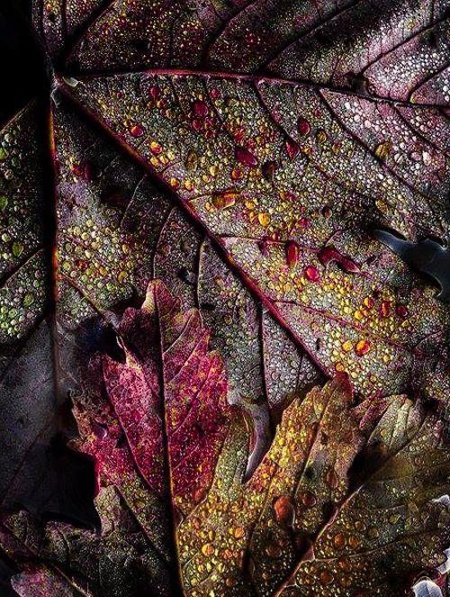 Vivid | Mixed | Color | Colour | цвет | カラー | Couleur | Colore |