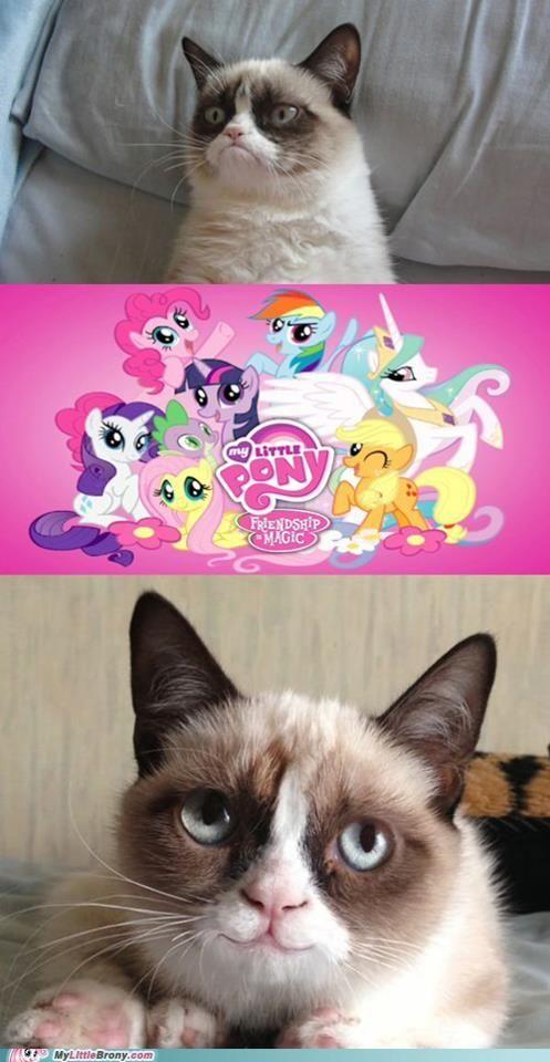 Grumpy Cat loves My Little Pony!
