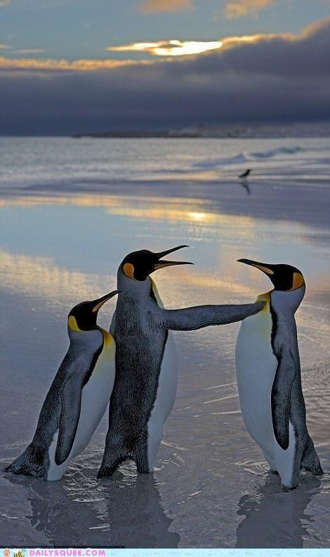 penguins chat