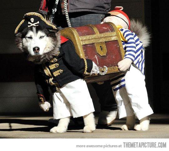Best Dog costume!