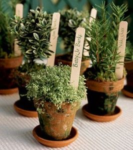 This is such a GREAT idea!  You could do any kinds of plants/flowers you want.  It's a place card and the floral decoration all in one!  Wedding favors + name cards could be a plant. Now what is more green than that?