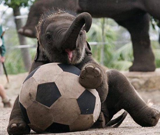 Any baby animals wanna play sports?