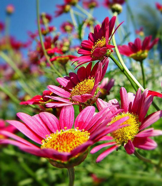 #pavelife #garden #flowers