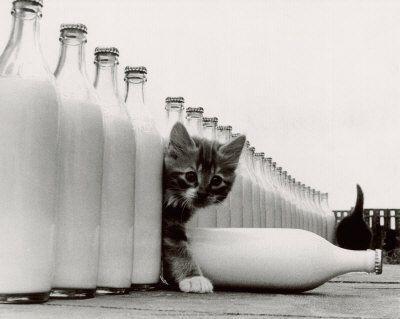 "did someone say ""milk""?"