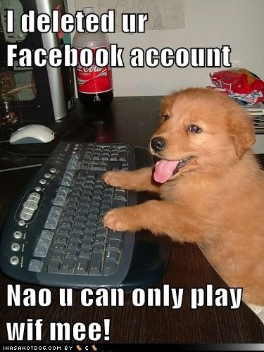 funny dog pictures – I deleted ur Facebook account  Nao u can only play wif mee!