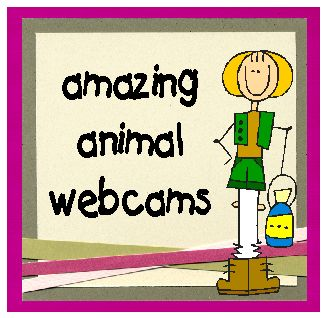 Oodles of Animal Webcams...All live. Plus free animal observation printables!