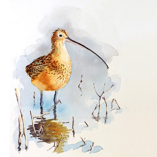 Shore Bird Art Watercolor Painting Curlew by WatercolorByMuren