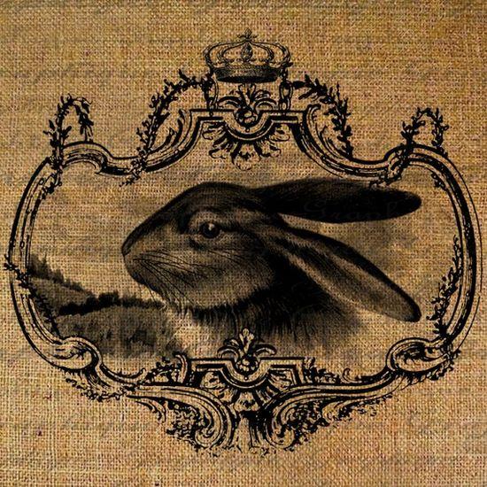 Bunny ?