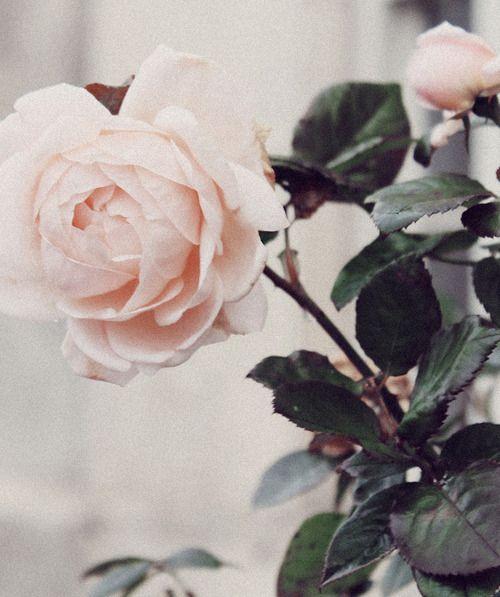 #Rose www.amazon.com/...