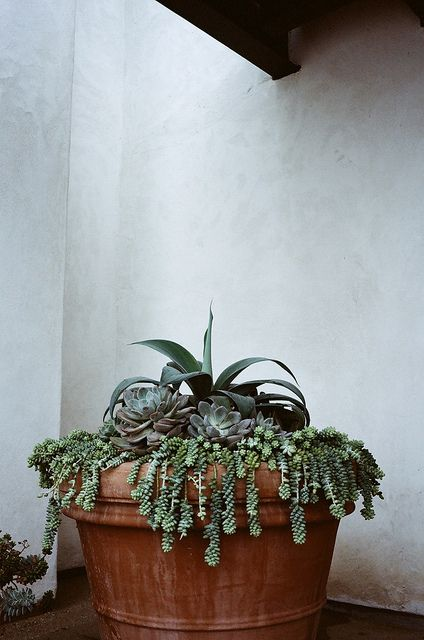 family of succulents. photo by james fitzgerald.