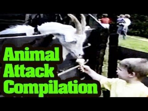 Funny Animals Videos : Funny Animal Attack Compilation
