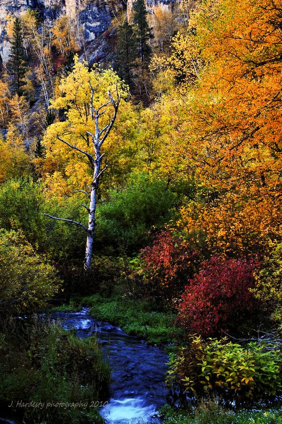Roughlock Falls in Spearfish Canyon, South Dakota