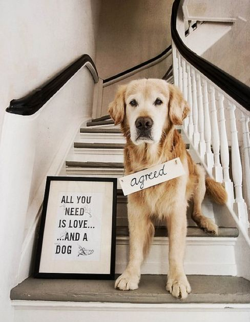 """All you need is love.. and a dog"""