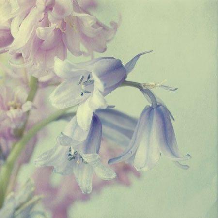 'Fairy Bells'