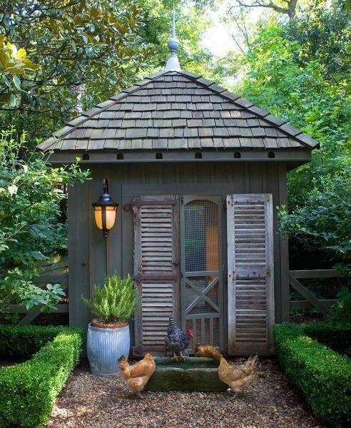 boxwood, sheds, and chickens