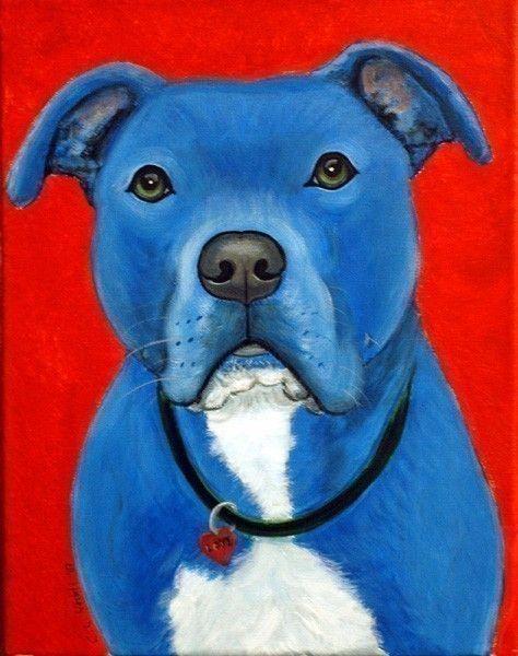 Blue Pit Bull