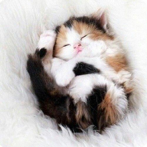 Baby cat is a sleep !!